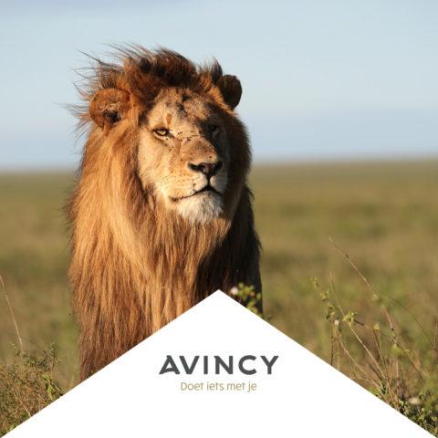 Avincy